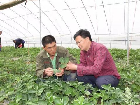 科技助农增信心
